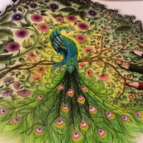 secret garden coloring book peacock johanna basford colorir gallery enchanted florest