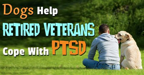 dogs for ptsd therapy dogs for veterans with ptsd