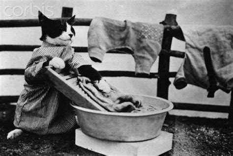 wash clothes in bathtub laundry cat vintage cats pinterest