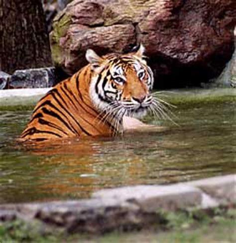 abused animals  sheltered   popcorn park zoo