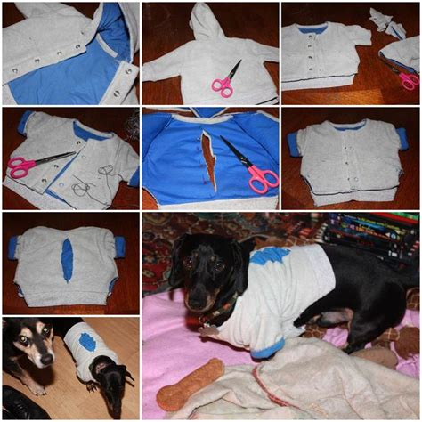 puppies in baby clothes 17 best images about happenings on for dogs diy and