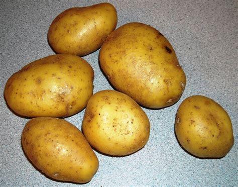 Potato Wiki by Potato Croquettes Wiki