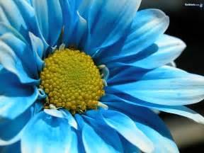 Flower Pic by Flower Beautiful Flowers Flowers Wallpaper Flowers 20