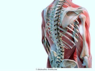 dolore alla gabbia toracica schiena dolore dorsale intercostale scapolare respirando petto