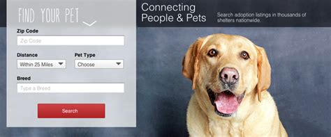 puppy adoption websites overstock launches pet adoption website