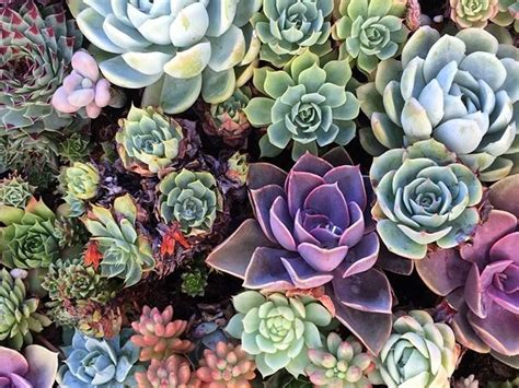succulent madness landscapers in santa fe 505 660 9599