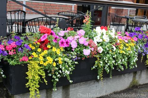 window box planting ideas b c flowers flowers and more flowers one