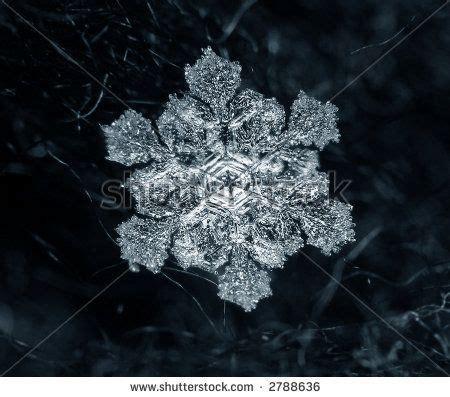 241 Best Snowflakes Papercut Images - 71 best images about snowflakes on snowflakes