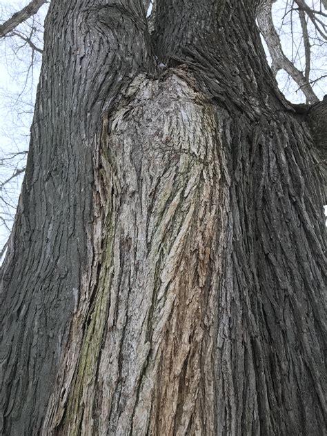 landscape wetwood  slime flux umass center