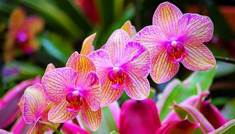 How Do Plants Adapt To The Tropical Rainforest - top 10 most beautiful flowers in the world top 10 listverse car review ufo alien