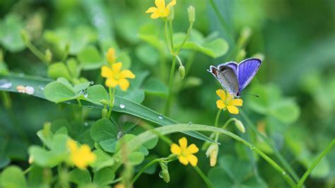 Garten Pflanzen Blaue Blüten by Die 50 Besten Blumen Und Schmetterlinge Hintergrundbilder