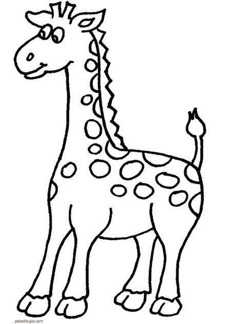 imagenes de jirafas para ninos dibujos de jirafas para colorear