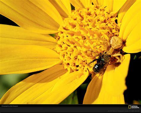 fiori di tutti i colori foto fiori di tutti i colori nelle grandi foto della