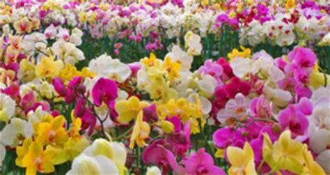 fiori di sanremo fiori liguri alle fiere olandesi di iftf e aalsmer market