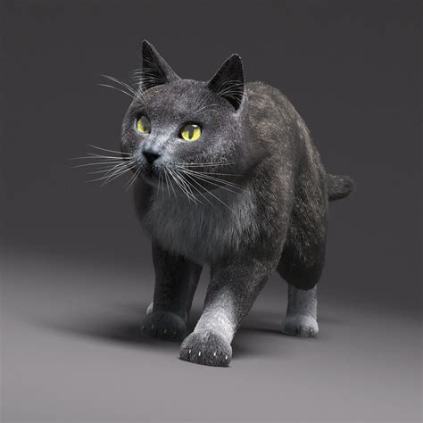 3d Cat domestic cat gray fur 3d model rigged max cgtrader