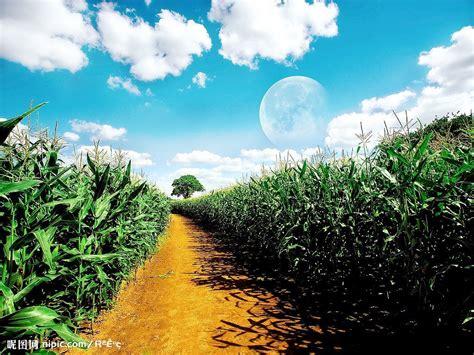 beautify worldwide 玉米地摄影图 田园风光 自然景观 摄影图库 昵图网nipic com