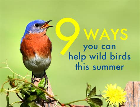 9 things you can do to help wild birds this summer