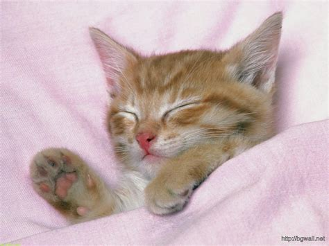 cute kitten sleep  pink bed wallpaper pc high definition