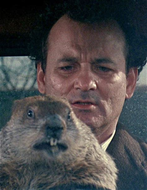 groundhog day just put that anywhere i got you why groundhog day is the of