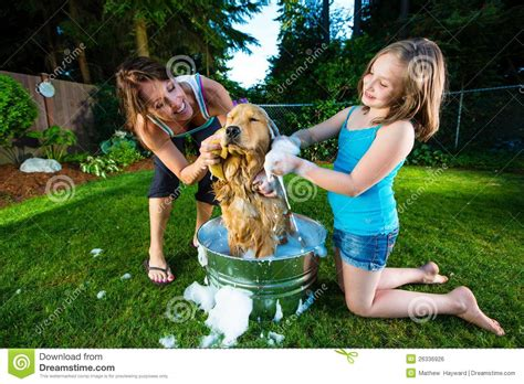 How To Clean A Dirty Bathtub Dog Bath Royalty Free Stock Image Image 26336926
