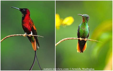 a couple of hummingbirds nature my view
