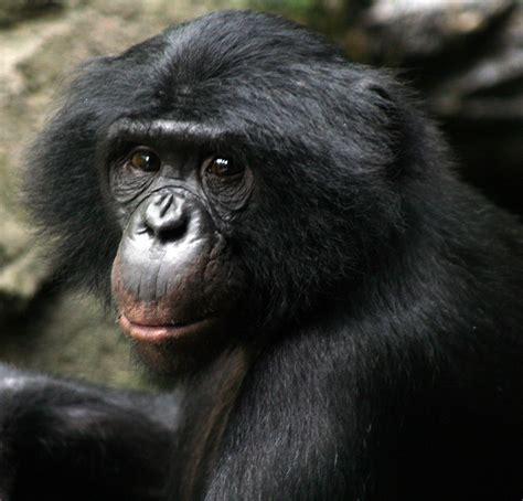Opinions on Bonobo