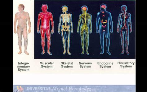 imagenes asquerosas del cuerpo lec001 introducci 243 n a la anatomia humana umh1158 2014 15