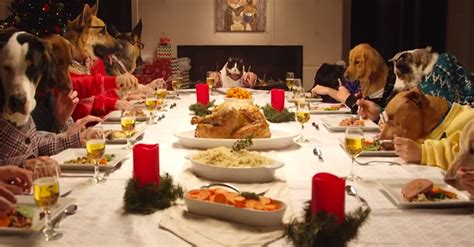 dogs at dinner table safe foods for dogs bayside pet resort