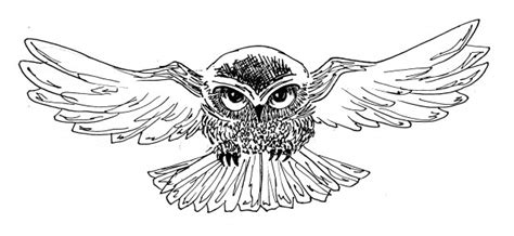 harry potter coloring book owl post owl 620x286 jpg