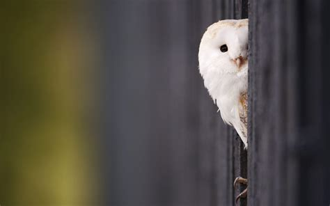 girly owl wallpaper free owl wallpapers wallpaper cave