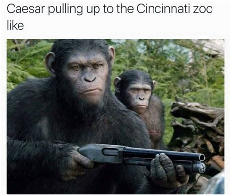 Planet Of The Apes Meme - best 25 harambe meme ideas on pinterest harambe the