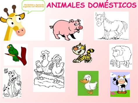 imagenes de animales vertebrados aves animales vertebrados e invertebrados cristyna