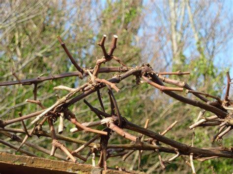 pruning the enduring gardener