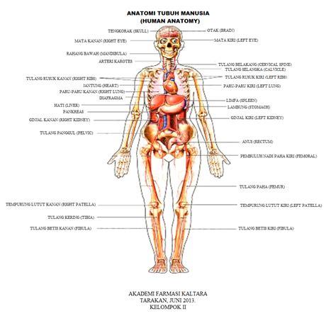 terminal tugas gambar anatomi tubuh manusia