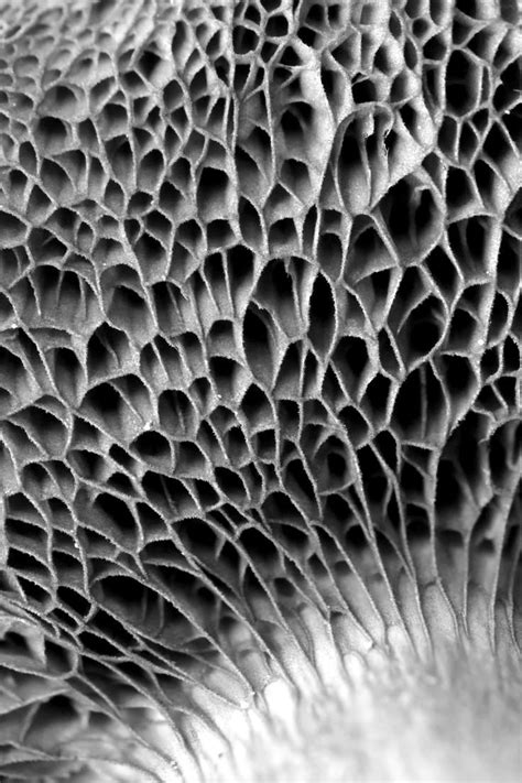 patterns in nature honeycomb fungus nature emergent structures pinterest