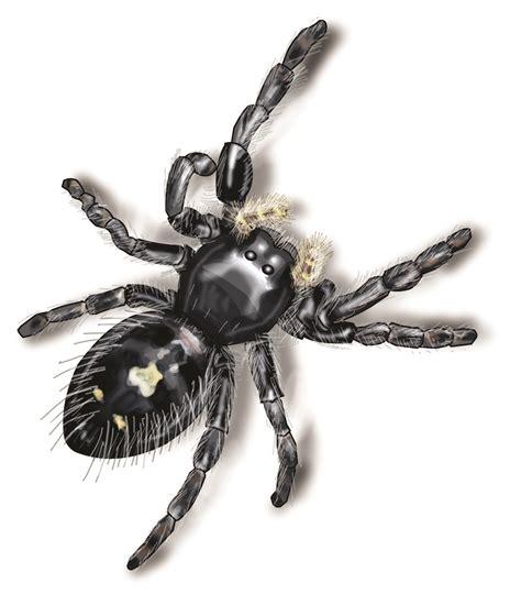 Silver Garden Spider Diet Common Jumping Spiders