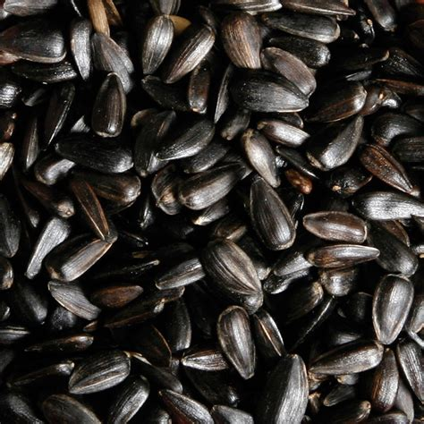 black sunflower seeds rspb wild bird food rspb shop