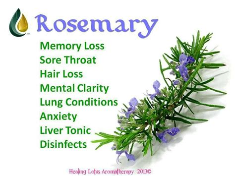 Medicinalcosmetic Uses Of Rosemary by 17 Best Images About Rosemary Living On