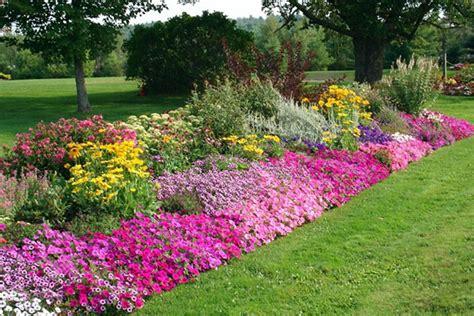 piante da giardino perenni fiorite piante perenni