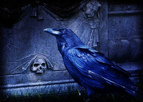 bryce vine night circus free download free photo composing raven dark cemetery free image