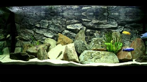 my juwel 400 liter malawi cichlids fishtank hd