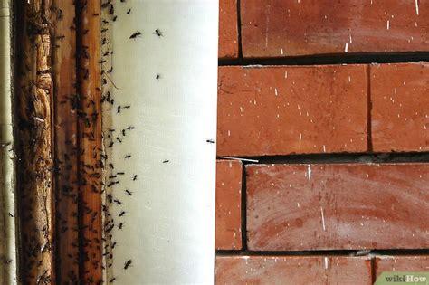 eine ameisenplage im haus bekaempfen wikihow