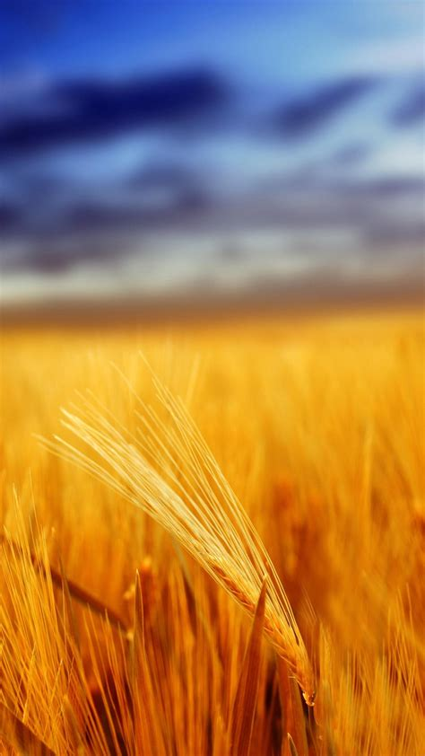 grain wallpaper grain field depth of field iphone 6 plus wallpaper