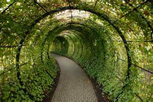 picture of the day a tunnel made of ivy 171 twistedsifter