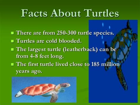 facts about green 10 facts about green sea turtles reptile gallery