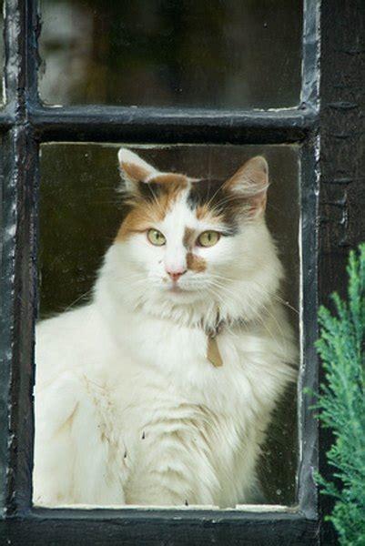 strictly indoor cat  fleas pets
