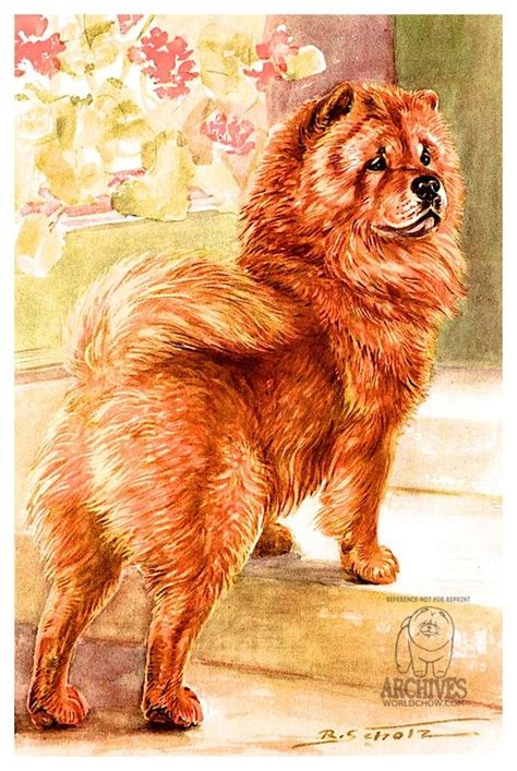 der chow chow book collection valerie gilb