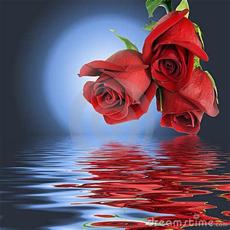 imagenes de rosas iluminadas untitled auslly life tumblr com