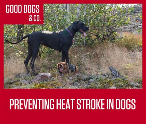 will a heat l keep a dog warm 220 best images about beat the heat with your pets on