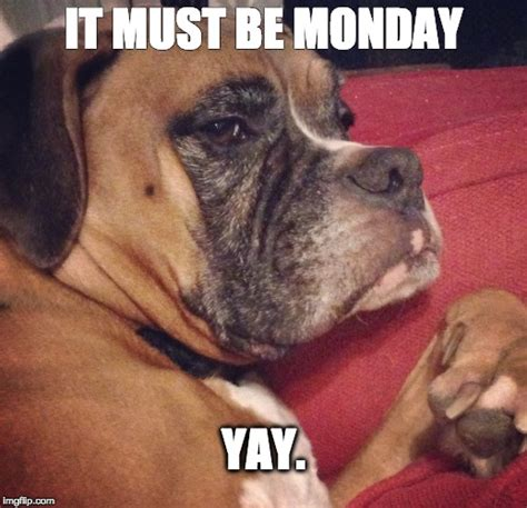 Monday Dog Meme - it must be monday yay imgflip